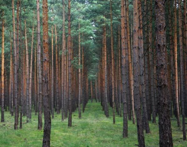 Waldeinsamkeit, Brandenburg